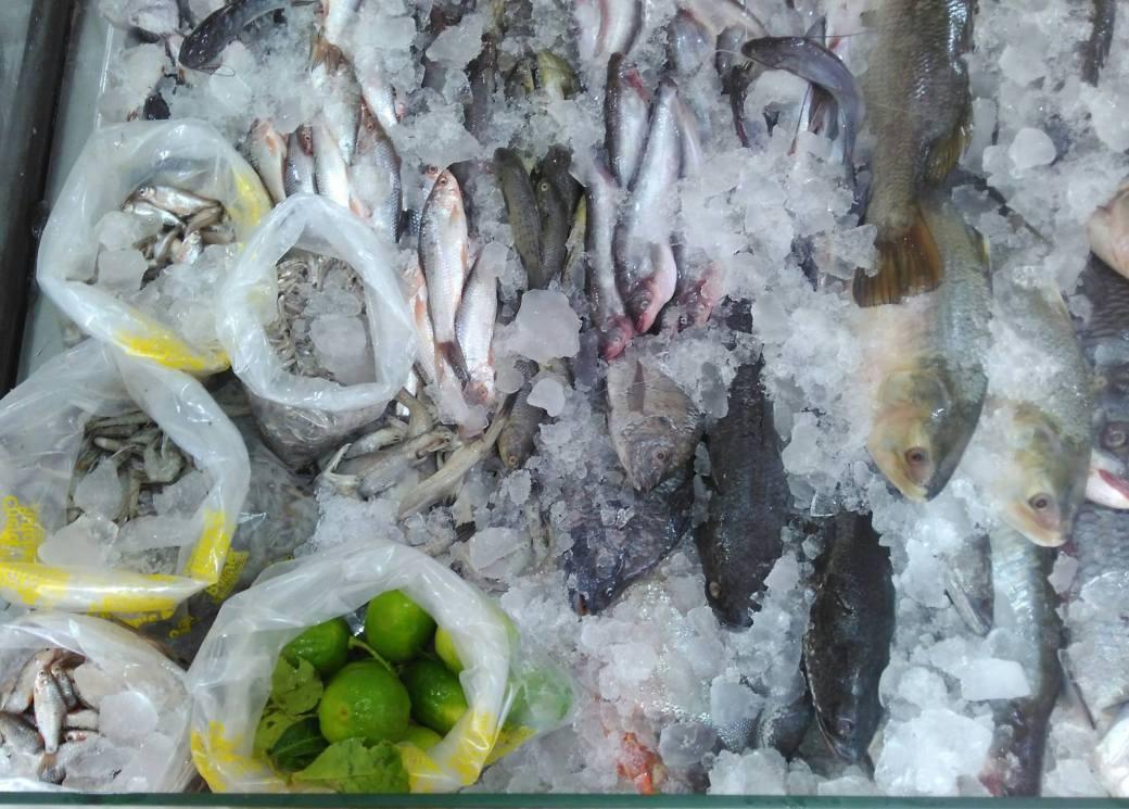 Bengali Fish : Different varieties of fish imported from Kolkata / Calcutta