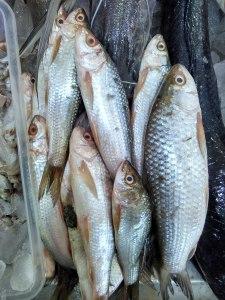 Bata / Reba Fish from Kolkata