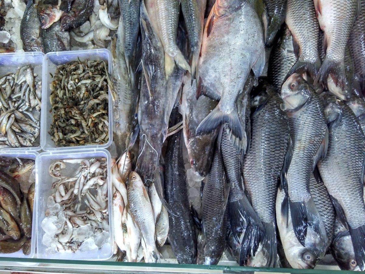 Imported Fishes from Kolkata / Calcutta