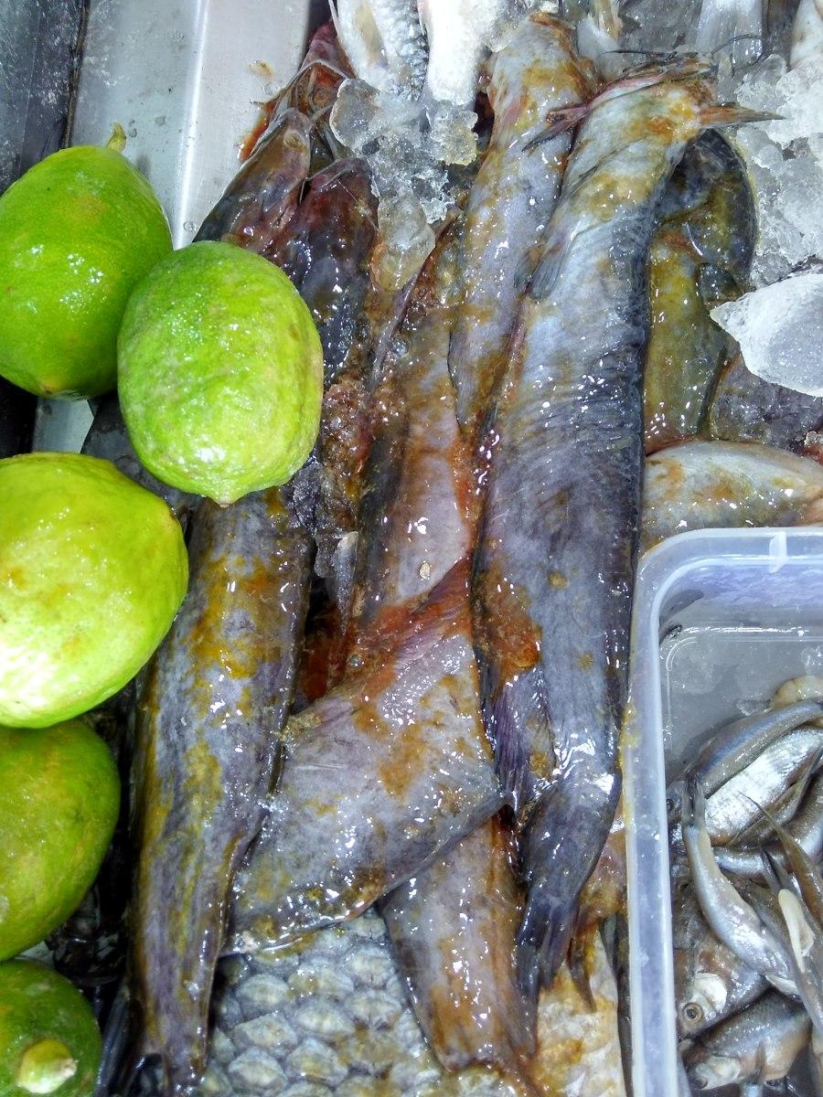 Shingi Mach / Stinging Catfish from Kolkata